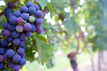 fresh-grape-fruit